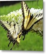 Double The Pleasure - Eastern Tiger Swallowtails Metal Print