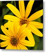 Double The Yellow Metal Print
