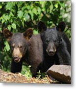 Double Trouble Metal Print by Gerry Sibell