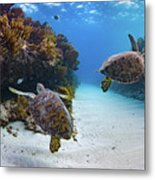 Double Turtles Metal Print