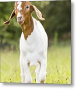 Dougie The Goat Metal Print