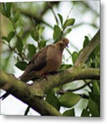 Dove Bar Metal Print