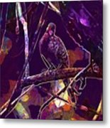 Dove Birds Animals Nature  Metal Print