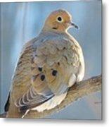 Dove In Evening Light Metal Print