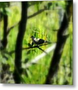 Dove In The Everglades  Metal Print