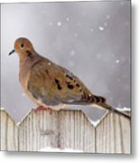 Dove In The Snow Metal Print