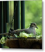Dove Nesting, Balcony Garden, Hunter Hill, Hagerstown, Maryland, Metal Print