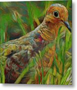 Dove Painterly Metal Print