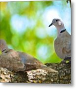 Doves In A Tree Metal Print