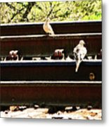 Doves On The Tracks Metal Print
