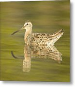 Dowitcher Reflection I Metal Print
