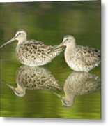 Dowitcher Reflections Metal Print