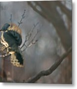Downey Woodpecker Metal Print