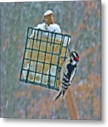 Downy Woodpecker In The Snow Metal Print