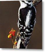 Downy Woodpecker On Tree Branch Metal Print