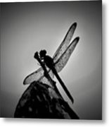 Dragon Fly Metal Print by William Jones