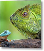 Dragon Forest And Frog Metal Print