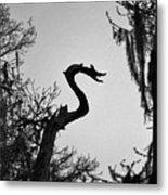 Dragon Shaped Tree Metal Print
