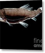 Dragonfish Metal Print