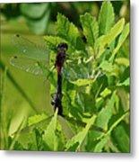 Dragonfly 1 Metal Print