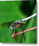 Dragonfly 11 Metal Print