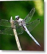 Dragonfly 12 Metal Print