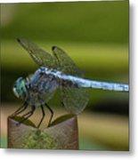 Dragonfly 14 Metal Print