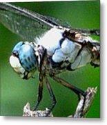 Dragonfly 16 Metal Print