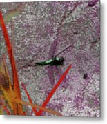 Dragonfly 3 Metal Print