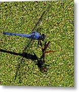 Dragonfly 73 Metal Print