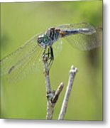 Dragonfly Against Green Backdrop Metal Print