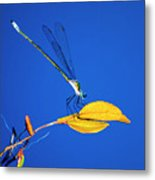 Dragonfly And Leaf Metal Print