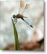 Dragonfly At Cypress Gardens Metal Print