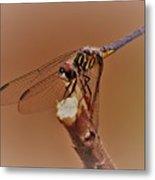 Dragonfly Beauty Metal Print