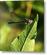 Dragonfly Called Funny Face Metal Print