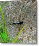 Dragonfly A Metal Print