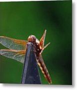 Dragonfly Cling Metal Print