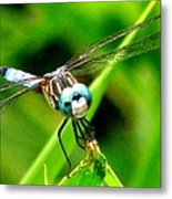 Dragonfly Close Up 2 Metal Print