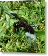 Dragonfly Close Up Metal Print
