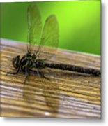 Dragonfly Colors Metal Print