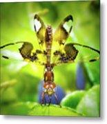 Dragonfly Design Metal Print