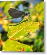 Dragonfly Dragonfly  Metal Print