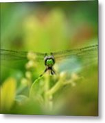 Dragonfly Dream In Green Metal Print