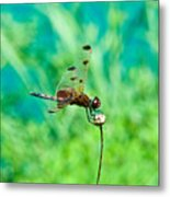 Dragonfly Hanging On Metal Print