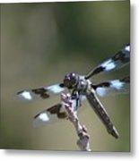 Dragonfly Hanging On  Metal Print
