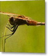 Dragonfly Holding On Tight Metal Print