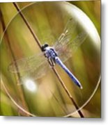 Dragonfly In A Bubble Metal Print