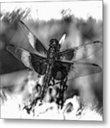 Dragonfly In Black And White Metal Print