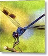 Dragonfly In Blue Metal Print
