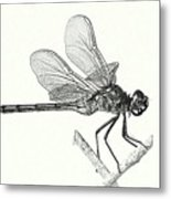 Dragonfly In Monotone Metal Print